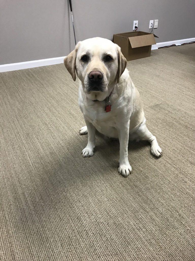 Bella the Wahoo dog